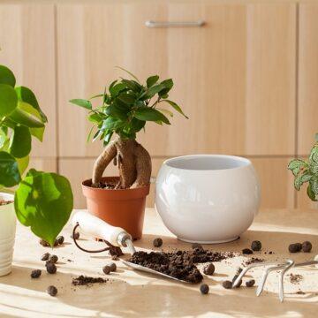 Jak zaprojektować przytulną i oryginalną dekorację wnętrza z roślinami tropikalnymi?