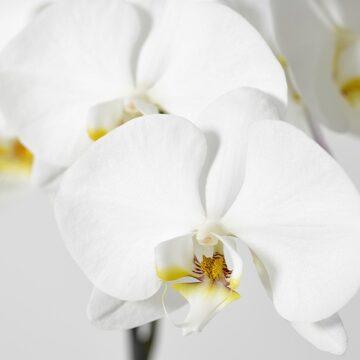 5 pięknych kwitnących na biało roślin dla Twojego domu. Wybór ekspertów.